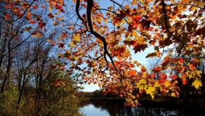 Fall-tree-branch-leaves-along-river_-_Virginia_-_ForestWander-1021x580